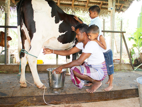 milk industry in sri lanka Sri lanka: opportunities for dairy sector growth nfc ranaweera national consultant colombo annex iii: flow chart of the dairy industry in sri lanka.