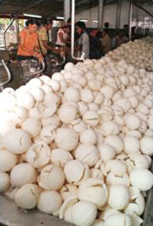 coconut industry